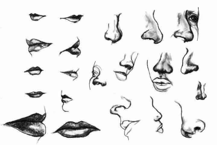 Disegno particolari volto