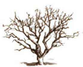 Alberi Disegno A Matita.Disegnare Gli Alberi