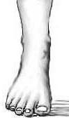 Disegno proporzioni piede