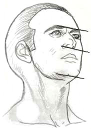 proporzioni viso