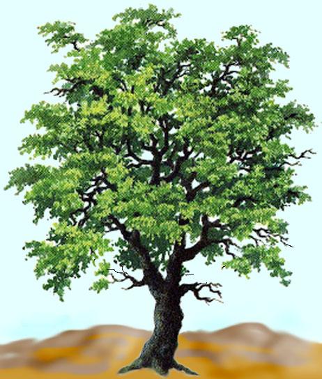 Disegni piante for Foto di alberi da colorare